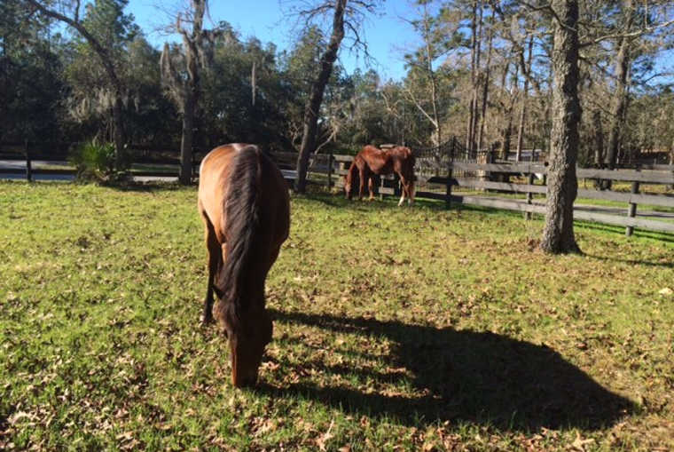 Horse Properties For Sale Lake County Fl